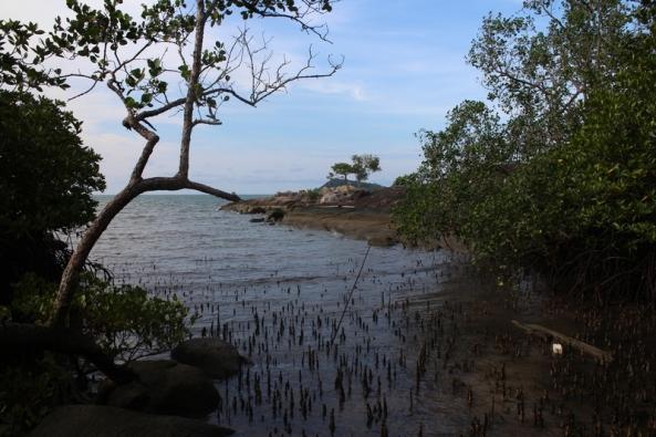 akar bakau antara batu ke 2 dan ke 3